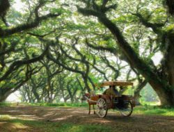 Banyuwangi Luncurkan Angkutan Pariwisata Gratis, Berikut Rute dan Persyaratan yang Harus Dipenuhi